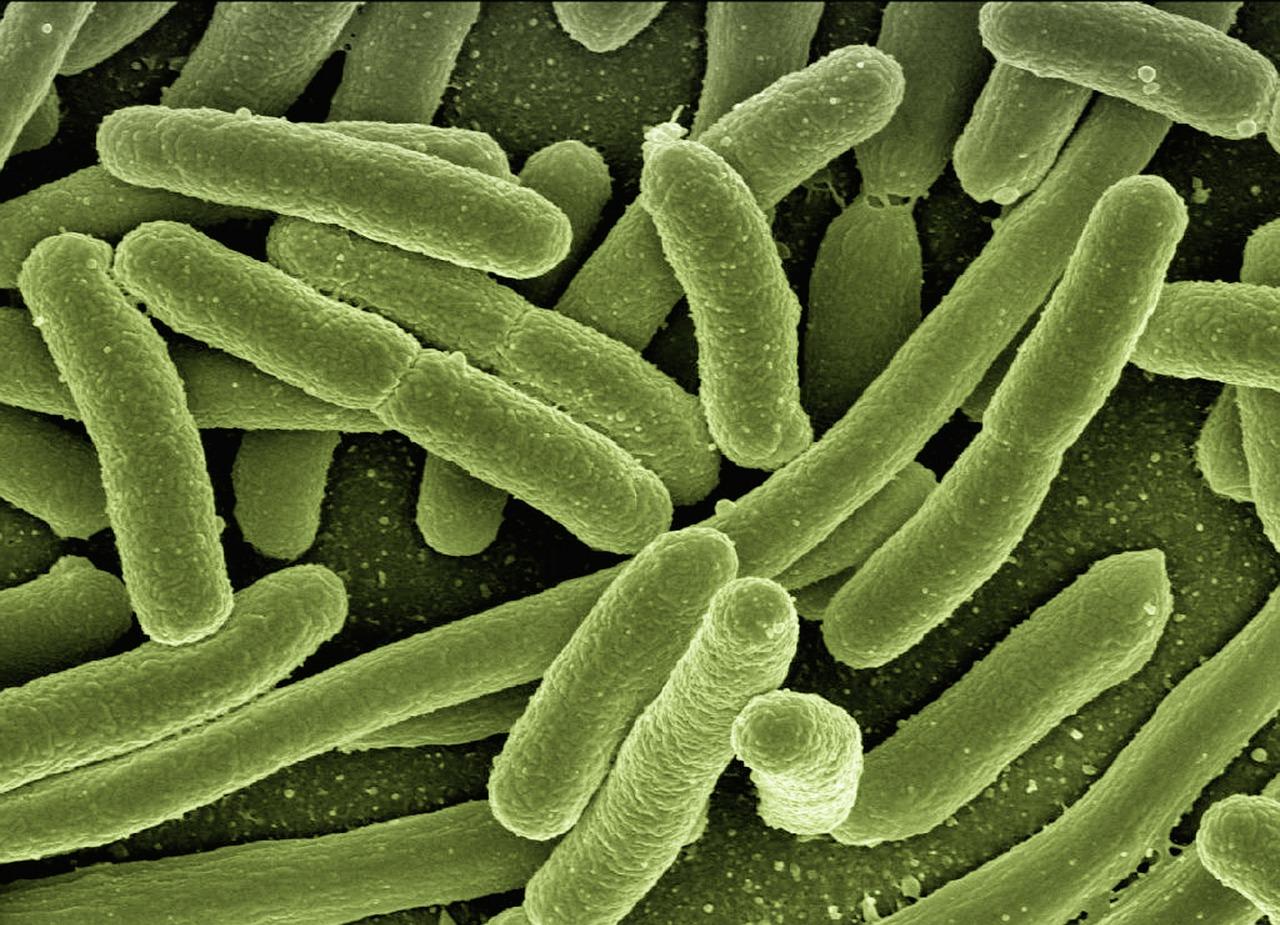 microbiotes et probiotiques