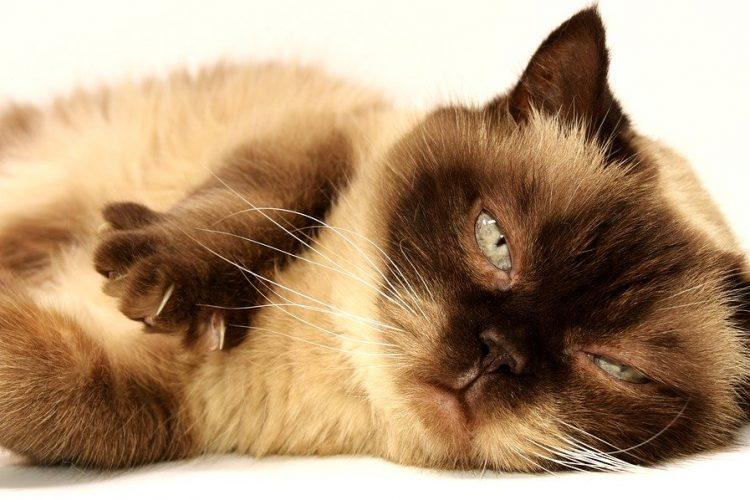 hygiène du chat
